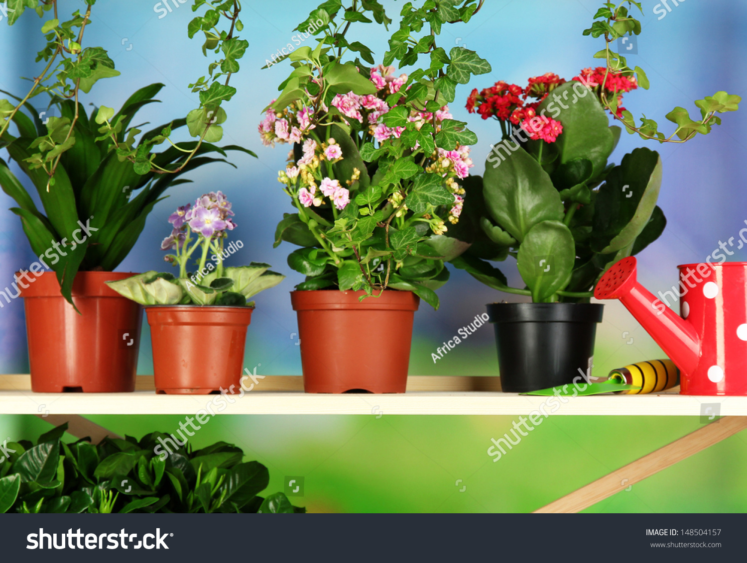 Beautiful Flowers Pots On Wooden Shelves Stock Photo Edit Now