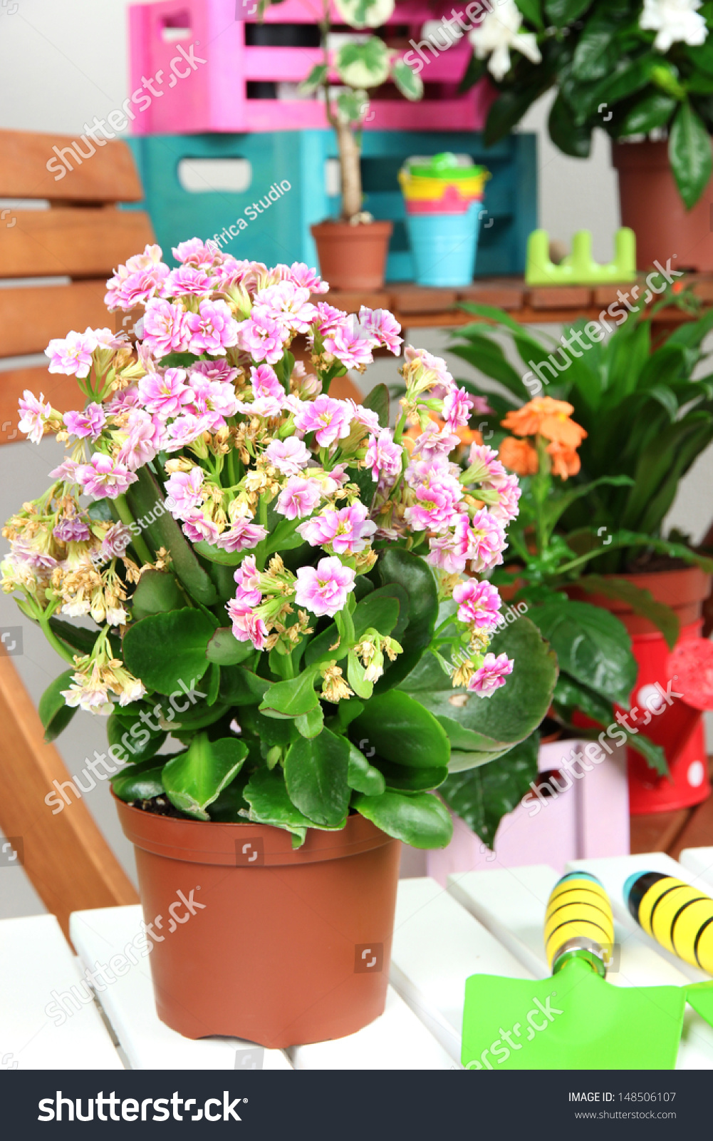 Many Beautiful Flowers Pots Room Closeup Stock Photo Royalty Free