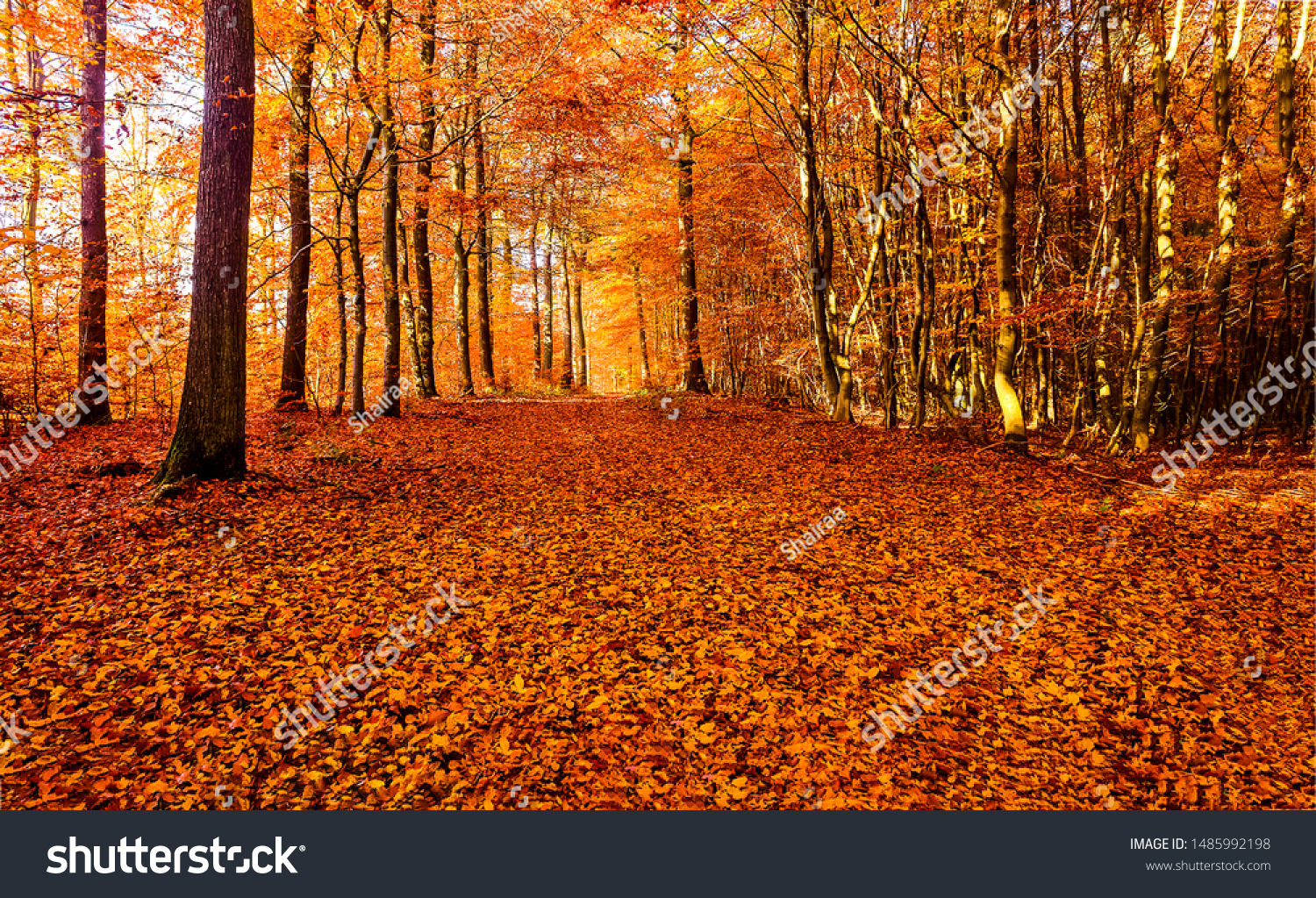 Autumn forest road leaves view. Autumn leaves ground. Autumn forest road landscape. Autumn leaves road view #1485992198