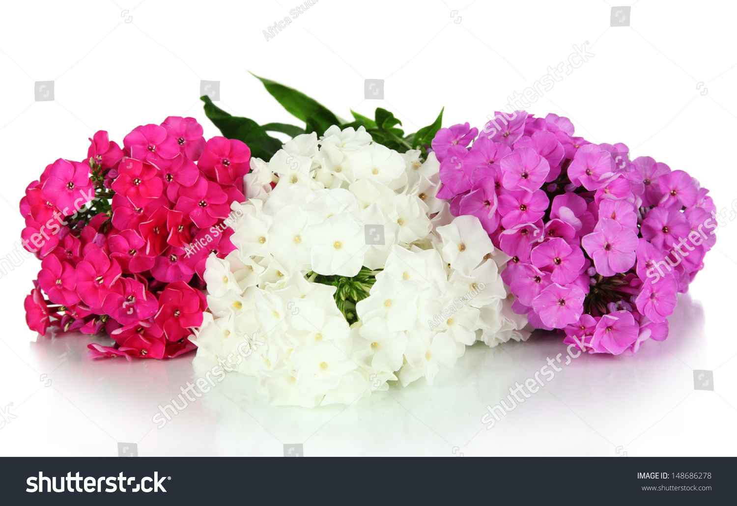 Beautiful Bouquet Of Phlox Isolated On White Stock Photo ...