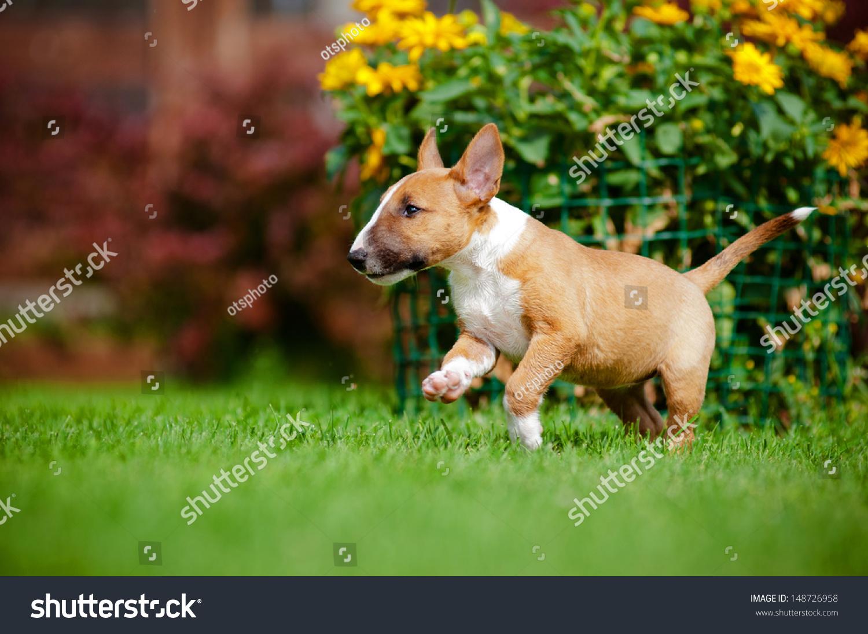 Dog Shelter Perth Puppies