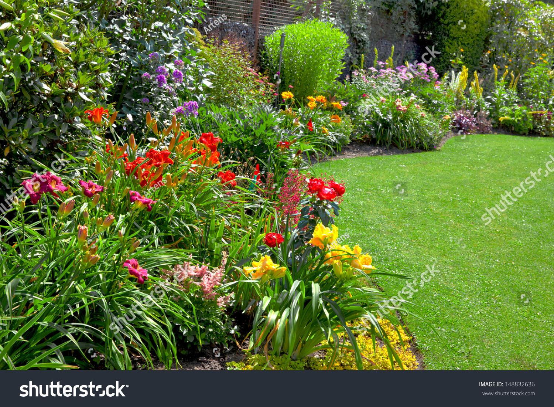 Цветы многолетние для дачи виды и