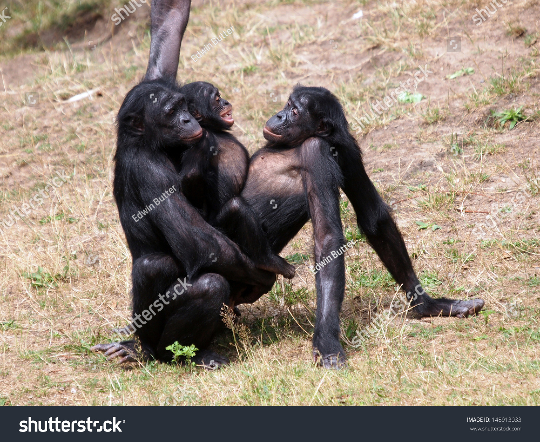 Секс обезьяна и человек 9 фотография