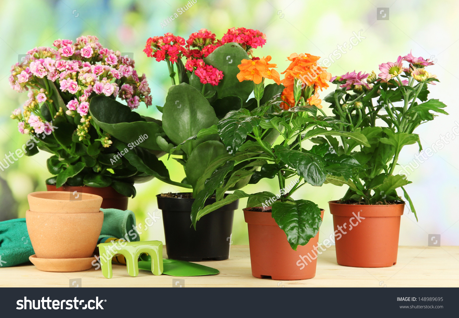 Beautiful Flowers Pots On Wooden Table Stock Photo Royalty Free