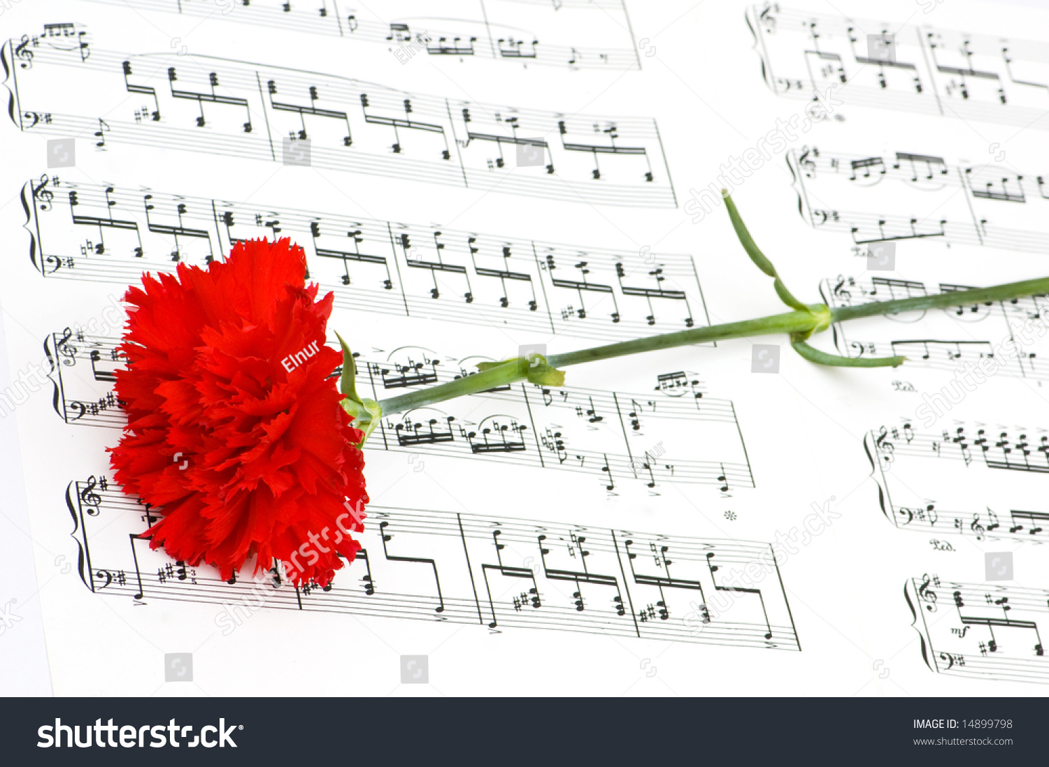 Red carnation flower on musical notes stock photo edit now red carnation flower on musical notes page ccuart Gallery