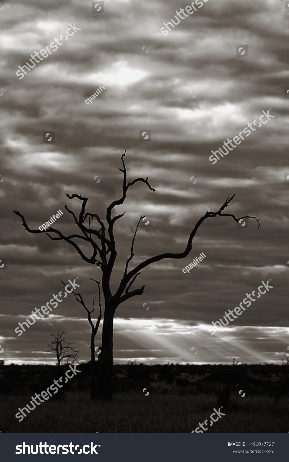 stock-photo-dead-tree-landscape-backgrou
