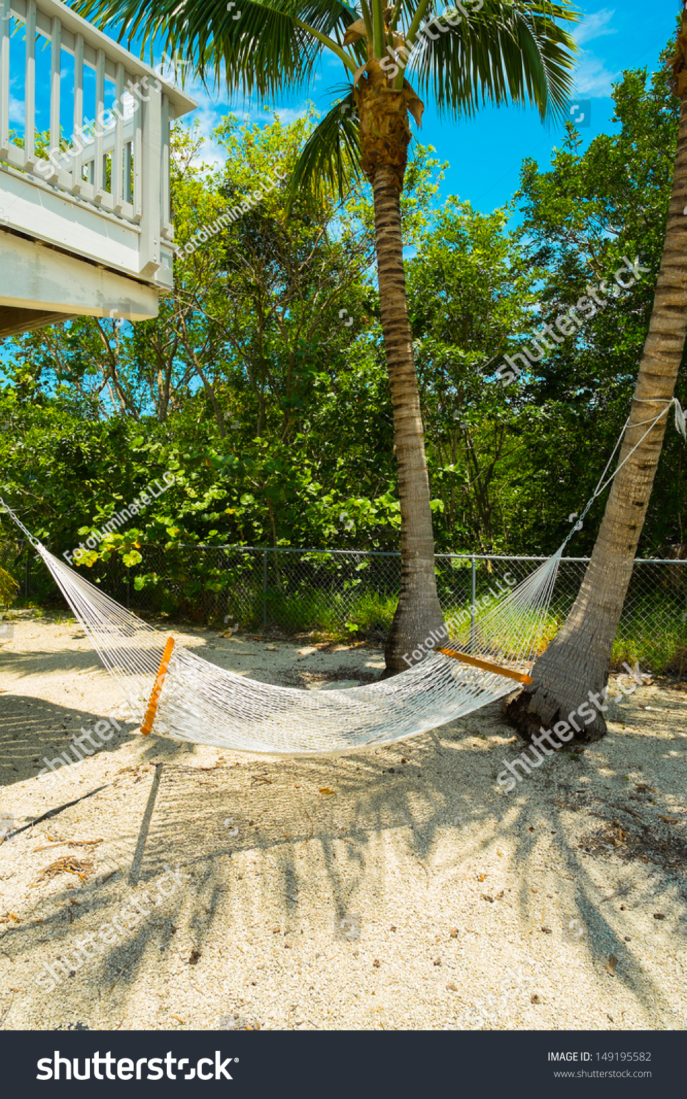 hammock hanging palm tree backyard florida stock photo 149195582