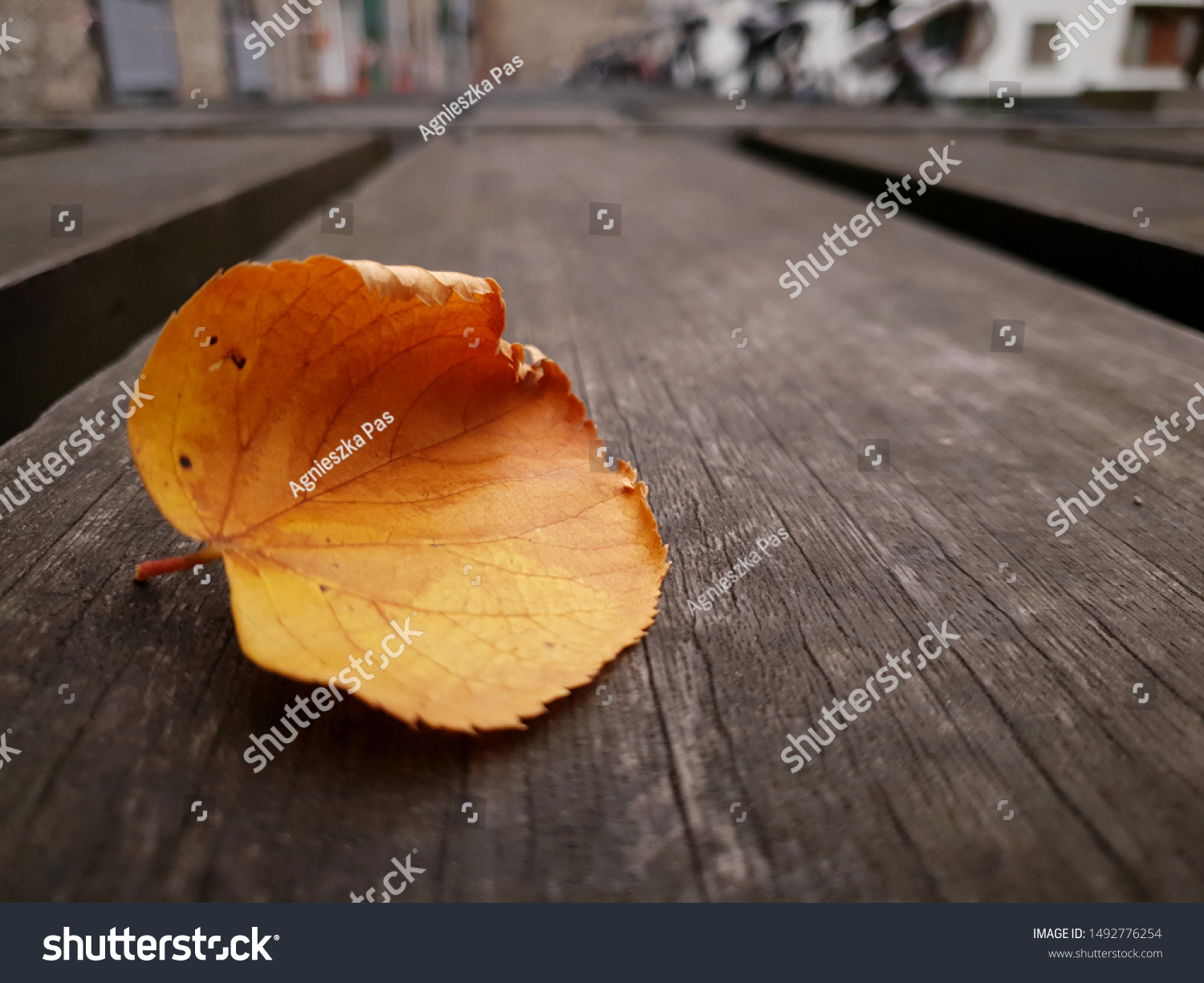 A close-up of orange dry leaf on wooden surface with a blur background