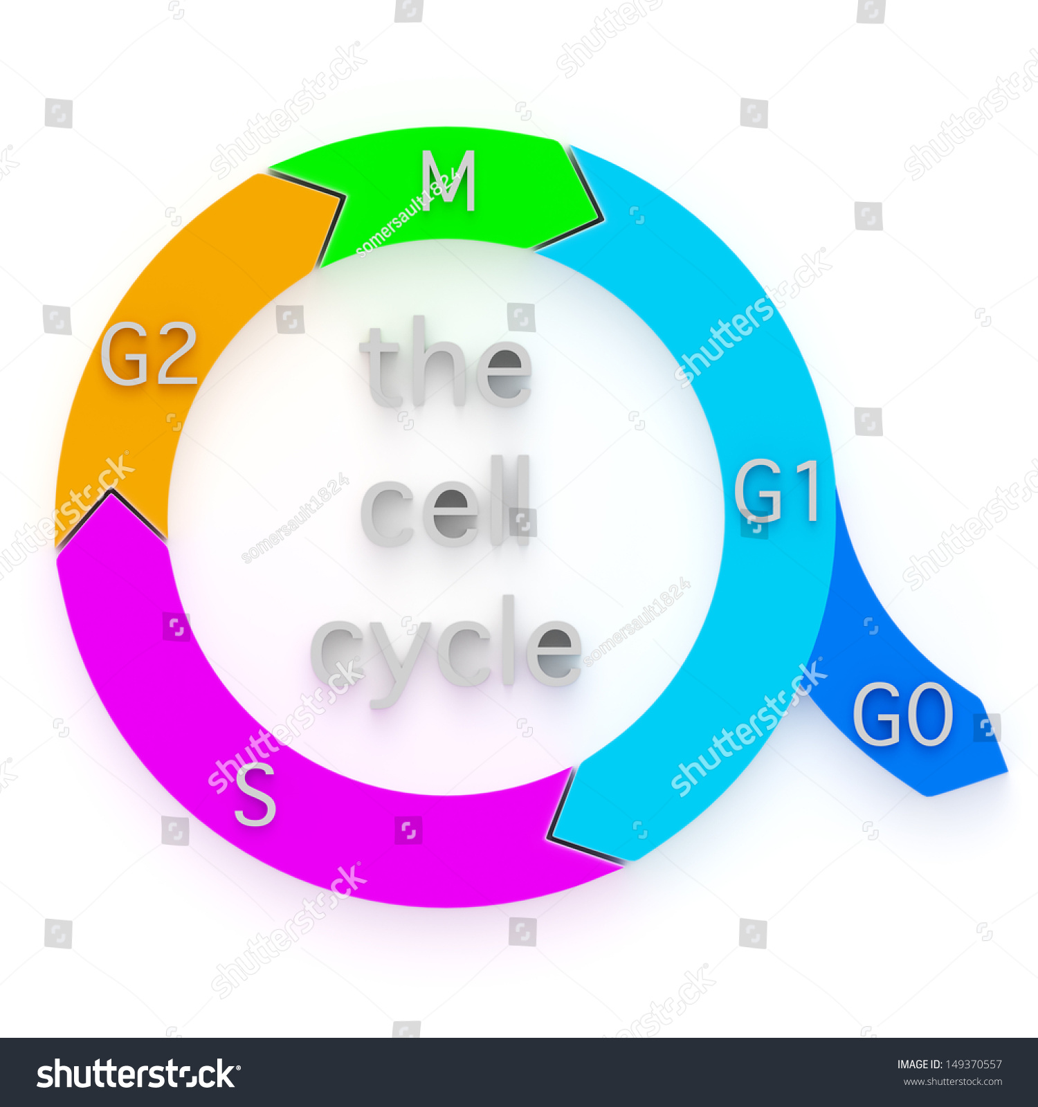 Diagram showing sequential phases cell cycle stock illustration diagram showing the sequential phases of the cell cycle or cell division cycle nvjuhfo Image collections
