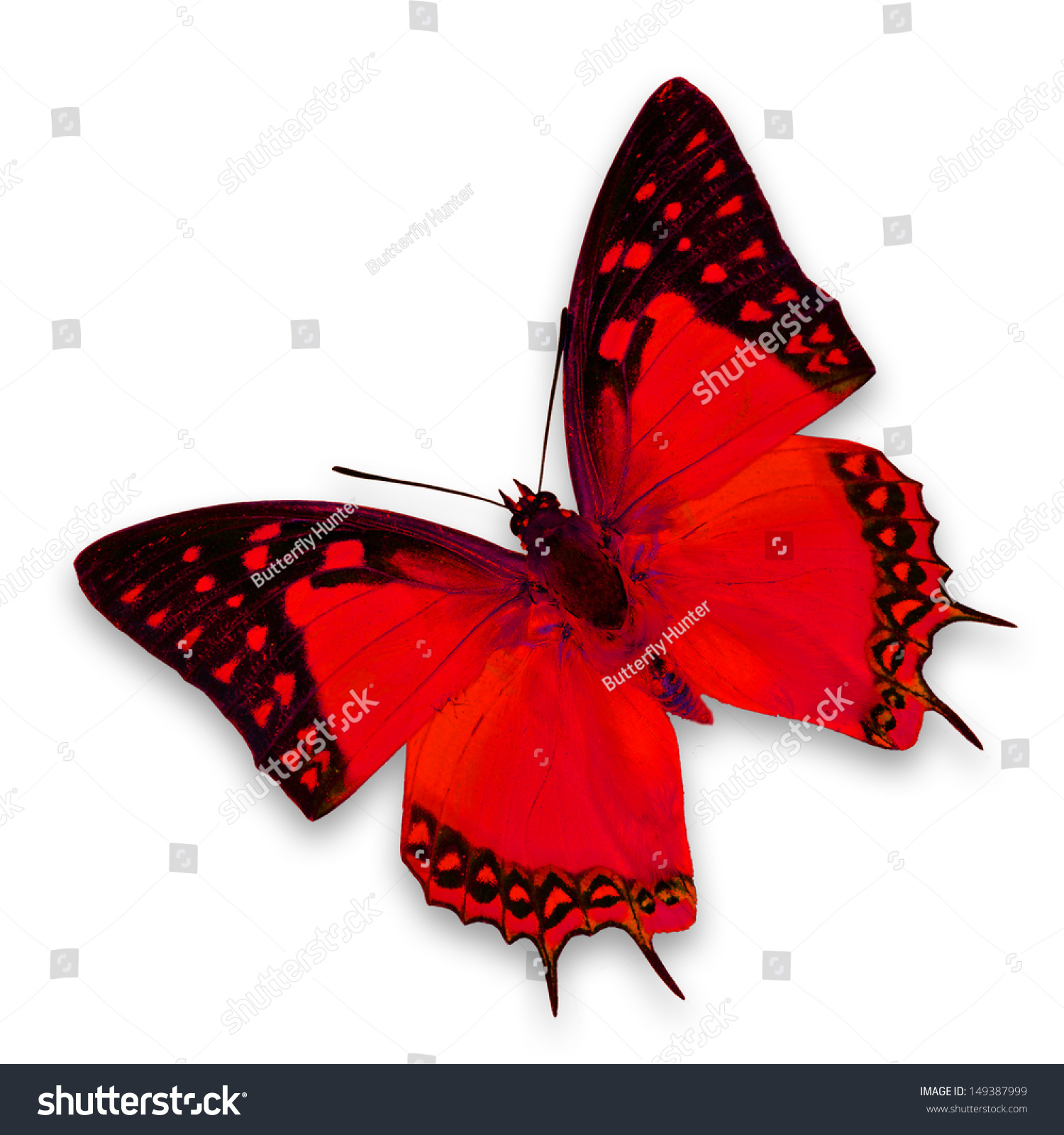 Red butterfly background - photo#14