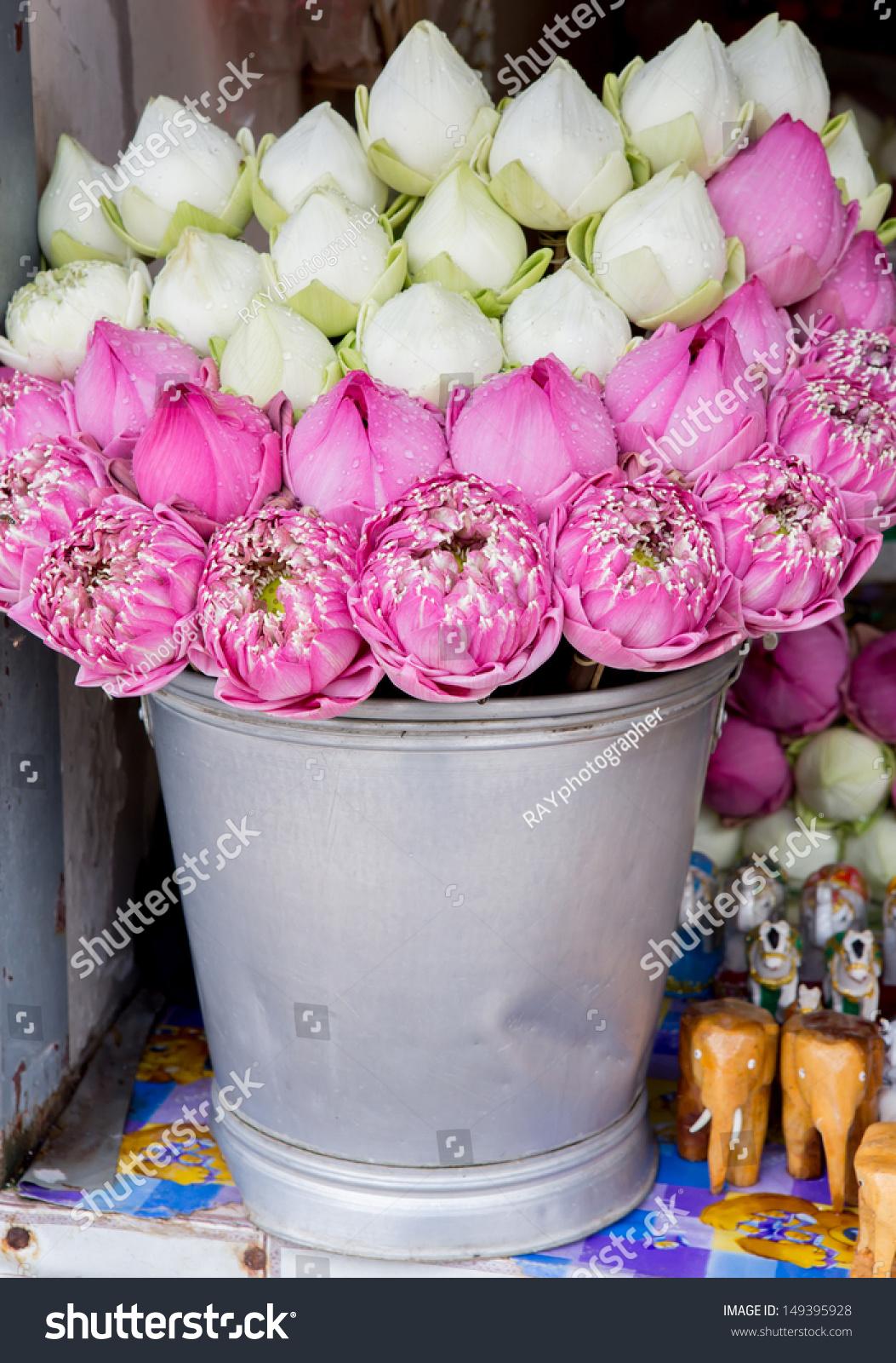 Lotus Flowers Ez Canvas