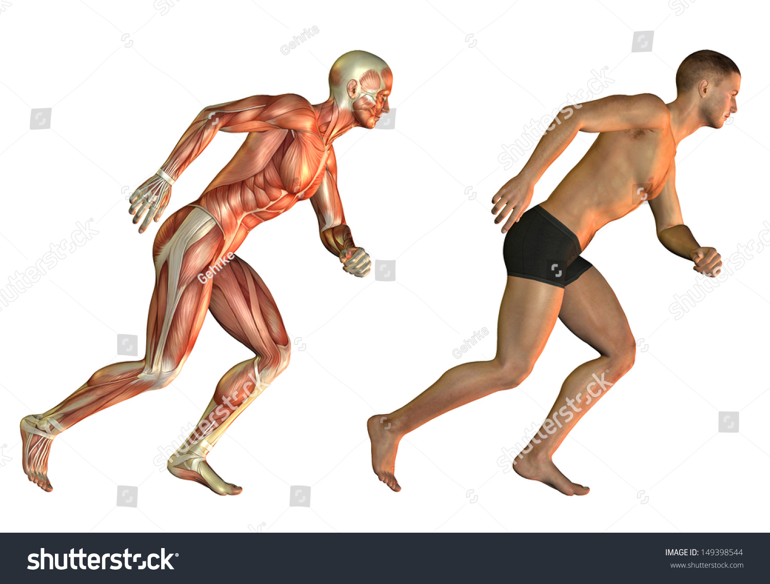 Anatomy Performance Study Man Muscle Structure Stock Illustration