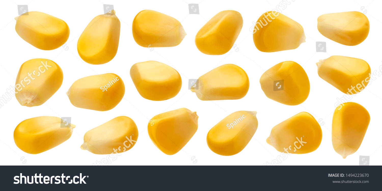Fresh corn seeds isolated on white background with clipping path, close up of raw yellow corn grains, collection, macro #1494223670