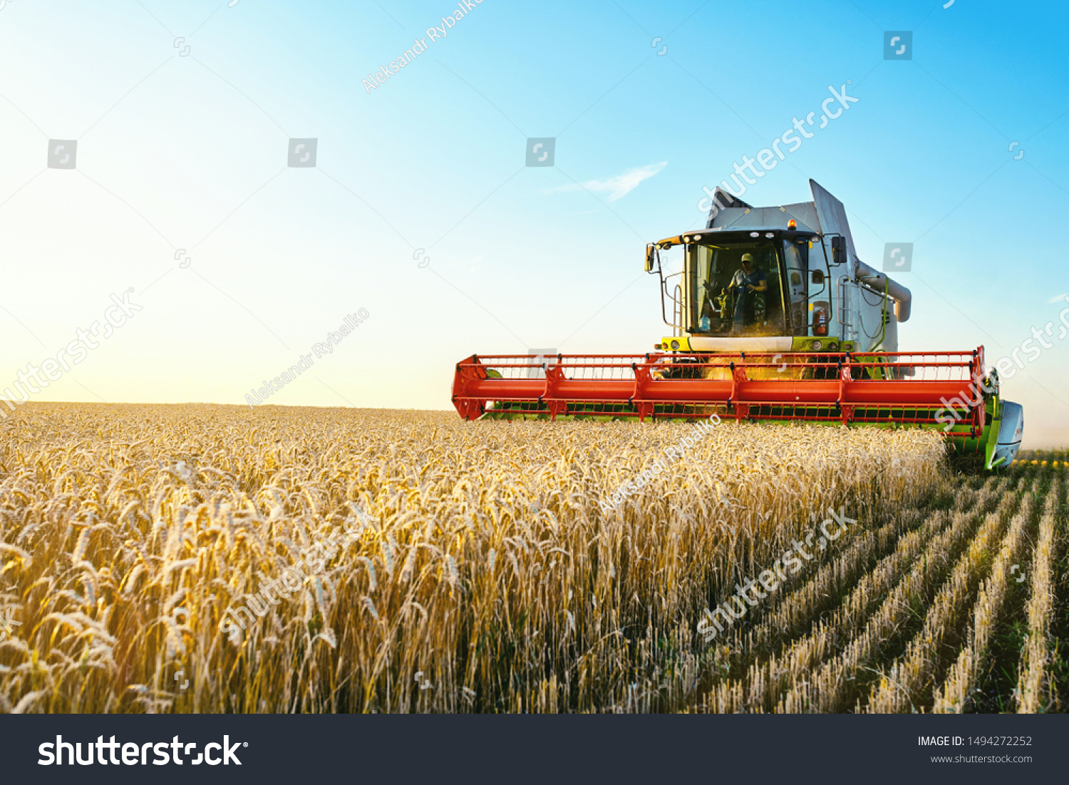 Combine harvester harvests ripe wheat. agriculture #1494272252