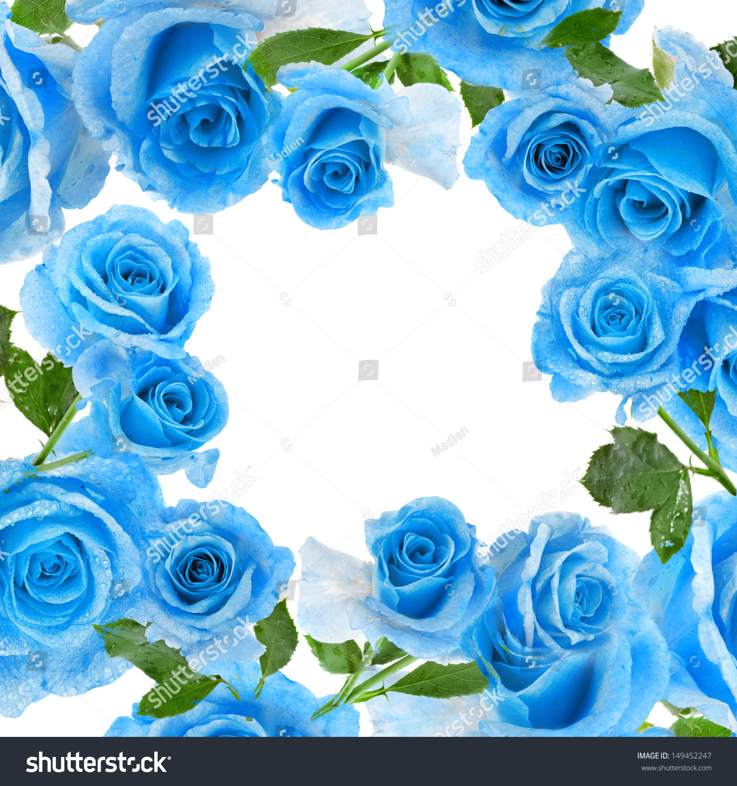 Frame Border Beautiful Blue Rose Water Stock Photo ...
