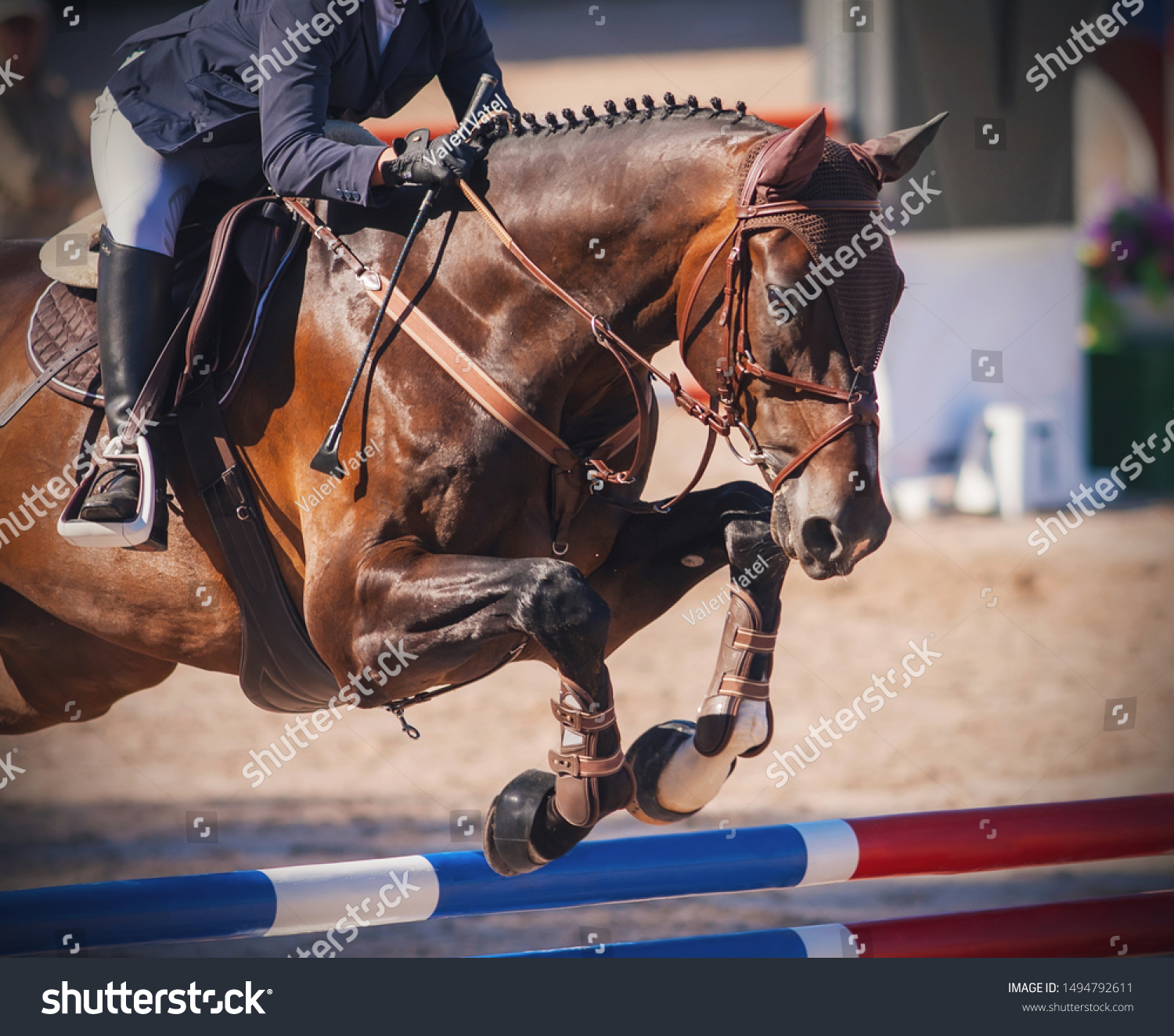 Chestnut Horse Dressed Brown Horse Gear Stock Photo Edit Now 1494792611