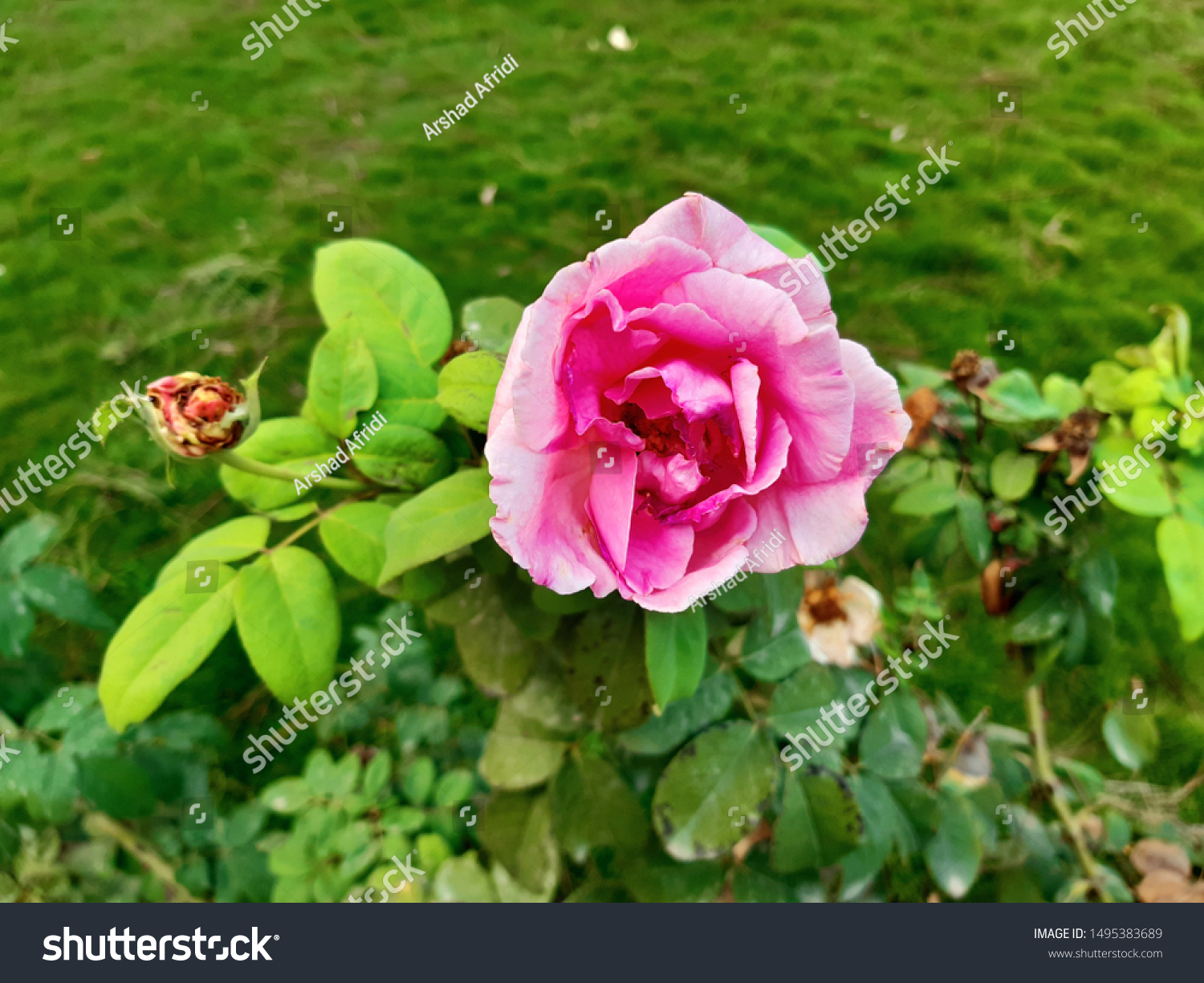 Flowers Most Beautiful Creation God Stock Photo Edit Now 1495383689