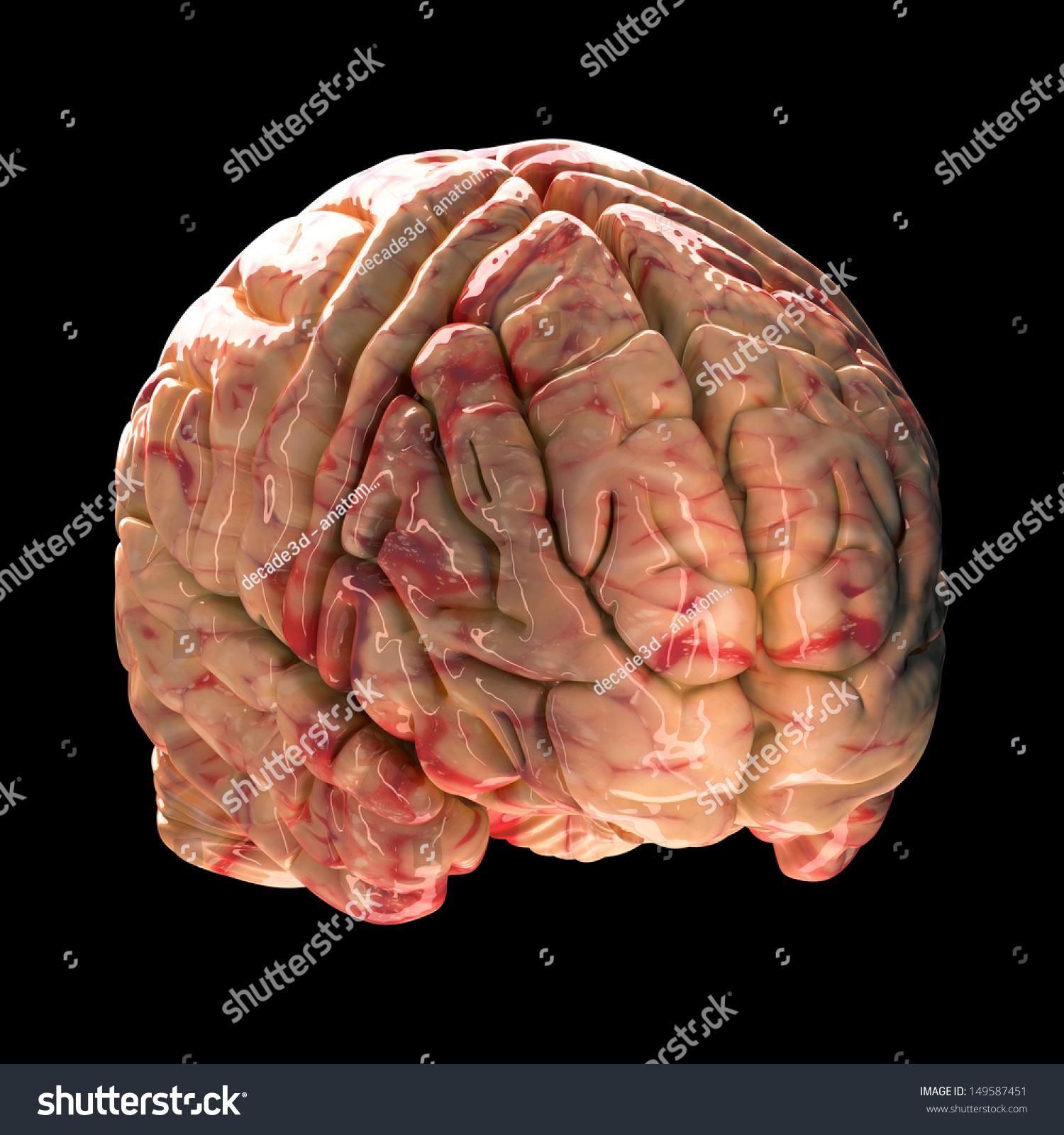 Anatomy Brain Isometric View On Black Stock Illustration - Royalty ...