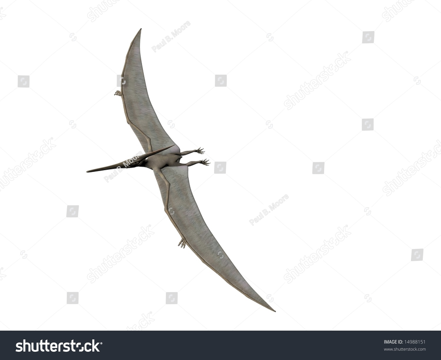 Royalty Free Stock Illustration of Pterodactyl Pteranodon Flying ... 9ee588fd8