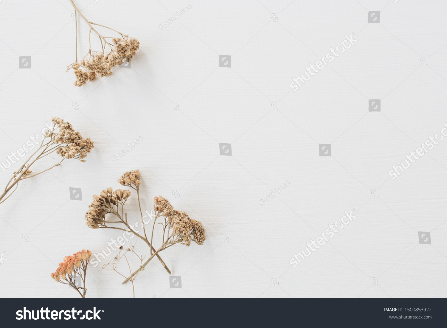 Dry floral branch on white background. Flat lay, top view minimal neutral flower background. #1500853922