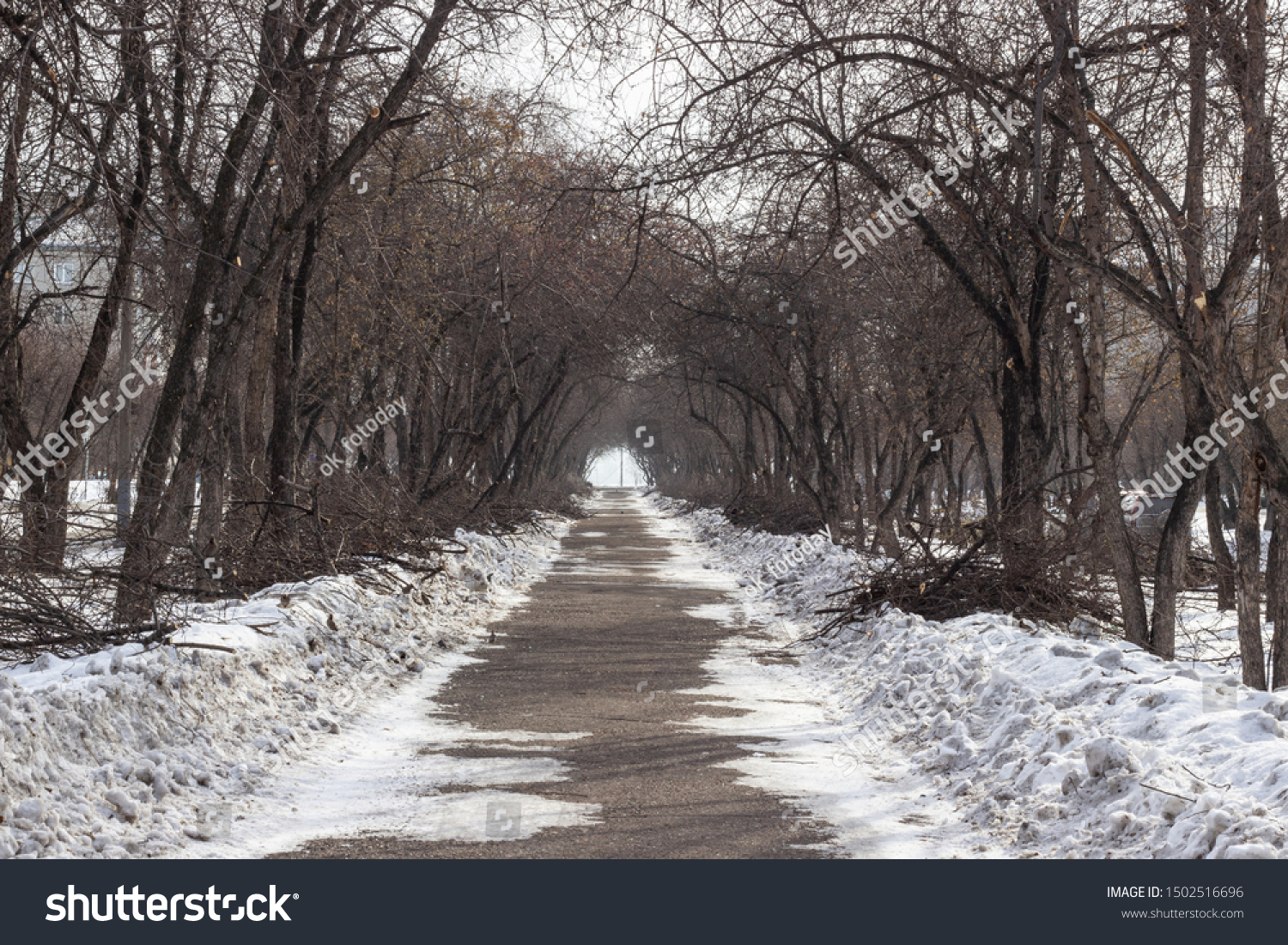 A deserted alley on a winter day, bare trees and cut branches in snowdrifts