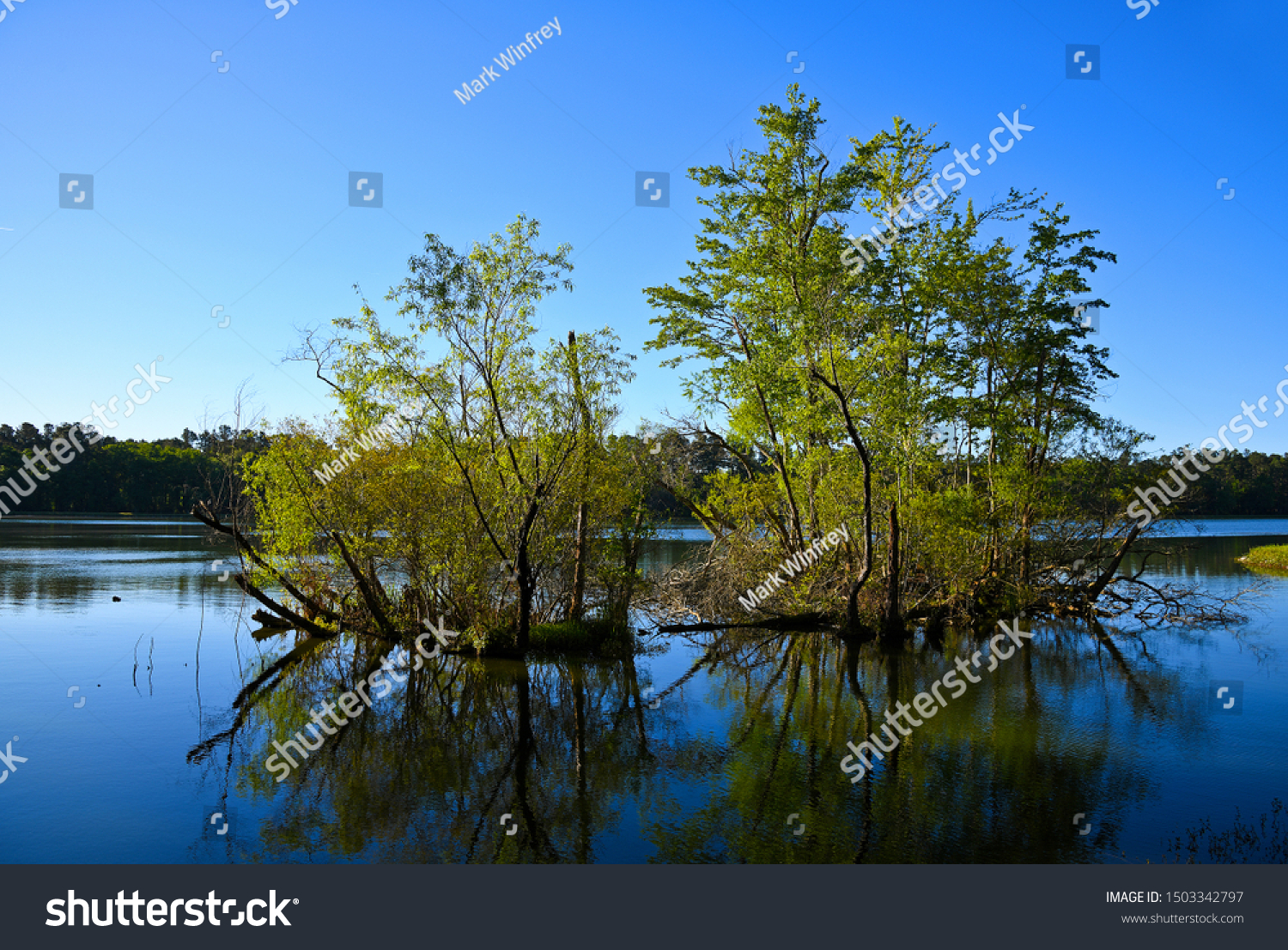 Early Morning view of the Lake with Trees Reflected in the Water