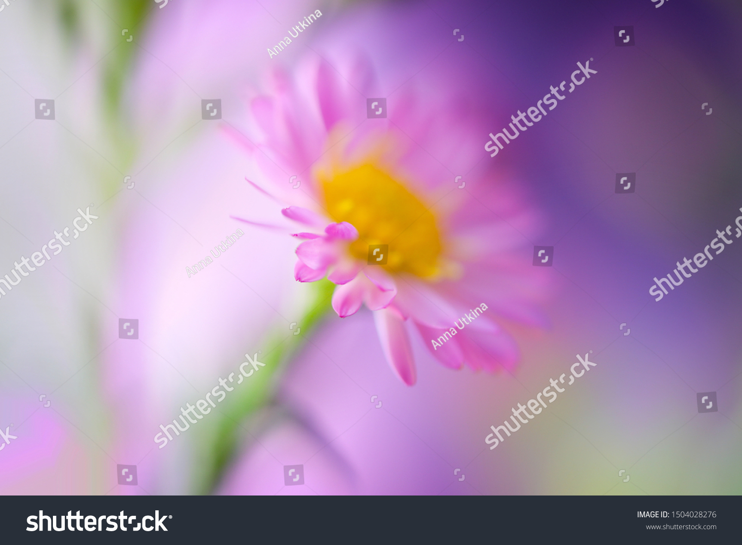 Beautiful Soft Pink Flower Macro Close Stock Photo Edit Now