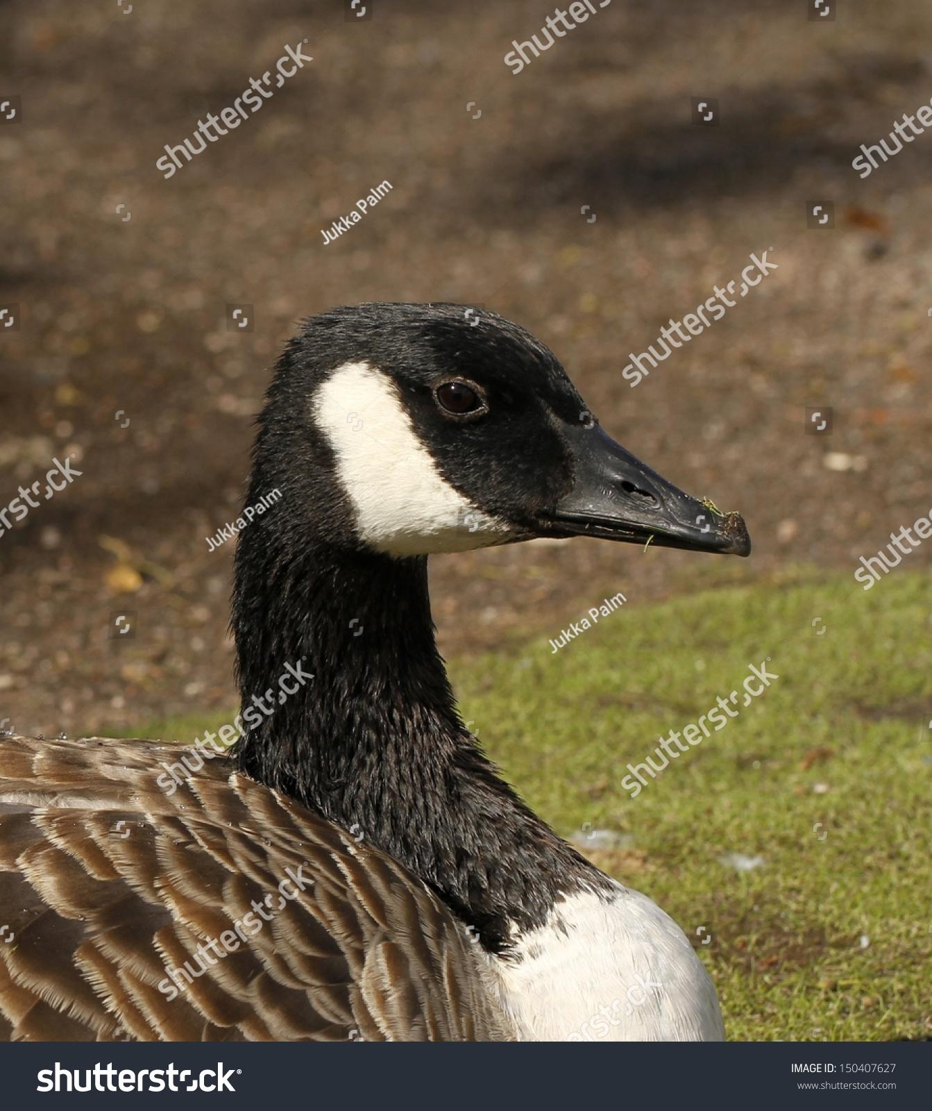 canada goose outlet helsinki