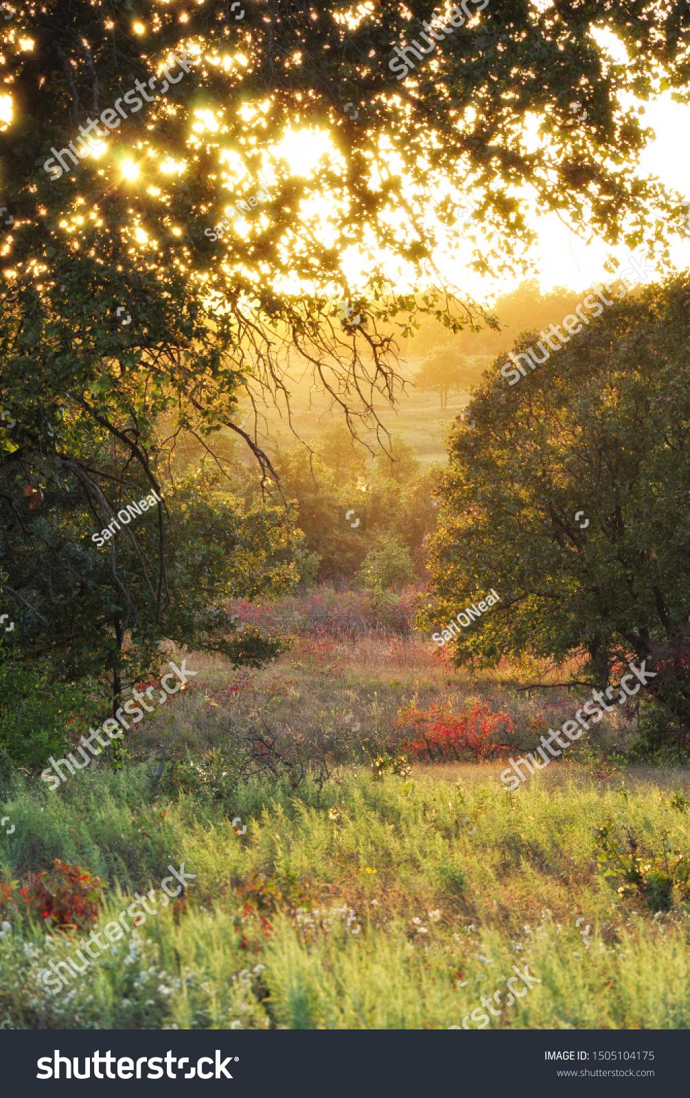 stock-photo-autumn-meadow-in-late-evenin