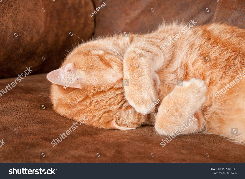 stock-photo-orange-tabby-cat-taking-a-na