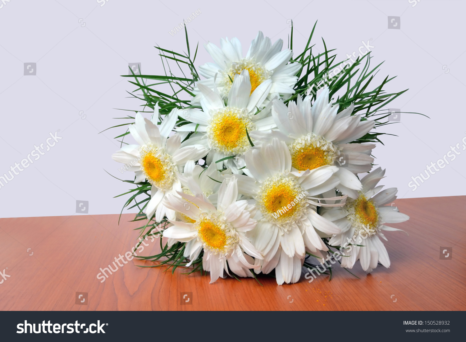 Shasta Daisy Bouquet Leucanthemum Superbum Fluffy Stock Photo Edit