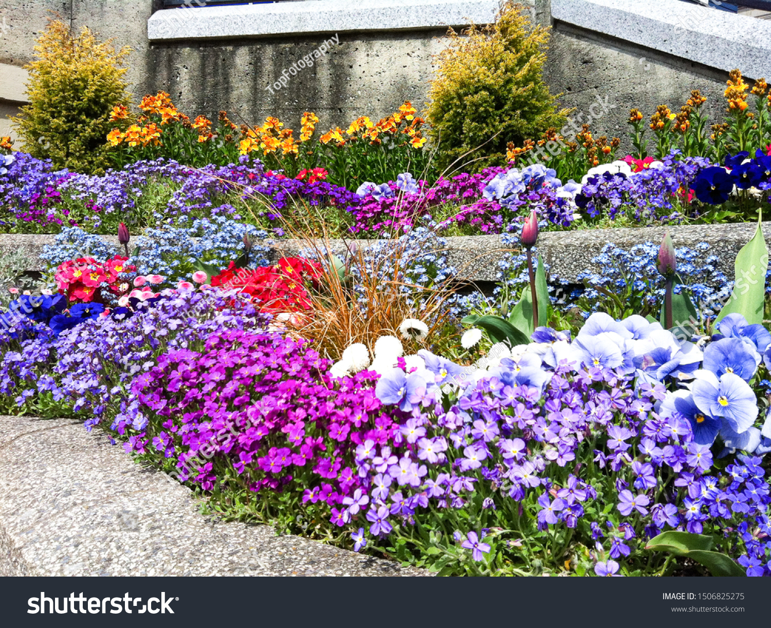 colorful flower bush in botany garden  #1506825275