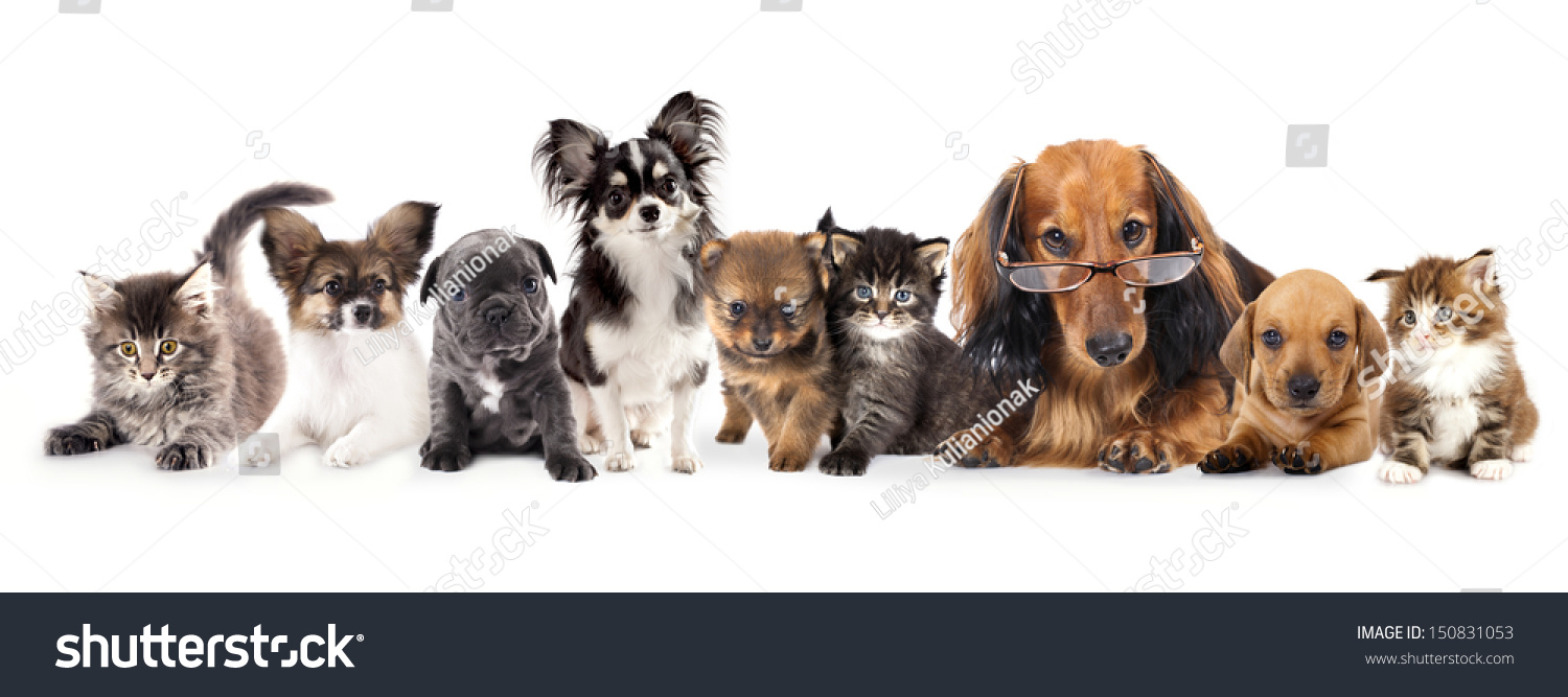 Group Of Puppies And Kitten Of Different Breeds Cat And Dog Ez Canvas
