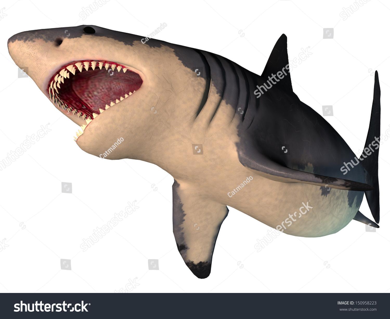 Bigger Than Megalodon Shark Toy : Megalodon shark on white extinct stock
