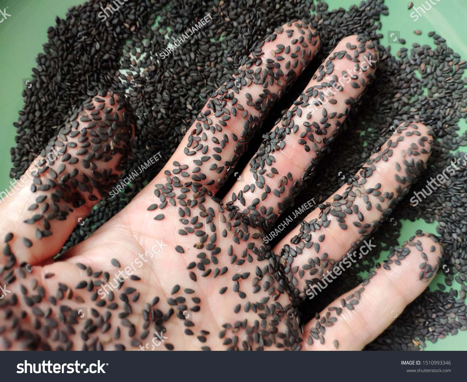 Hand Stained Black Sesame Seeds This Healthcare Medical Stock