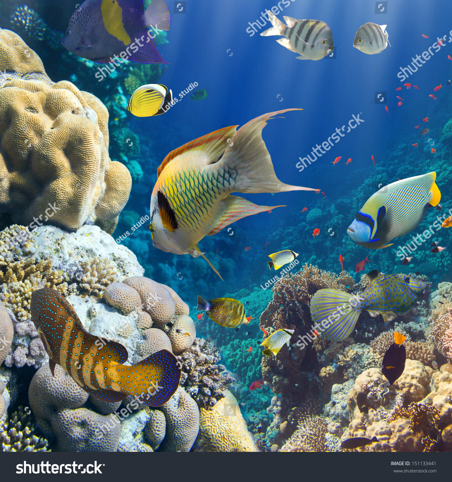 Coral and fish in the red sea egypt stock photo 151133441 for Red sea fish