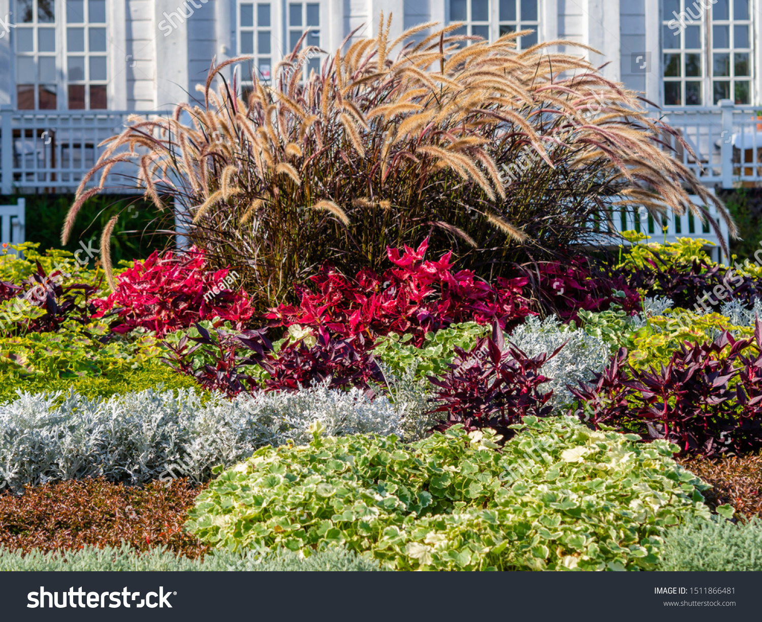 Autumn Flowerbed Gorgeous Purple Fountain Grass Stock Photo Edit