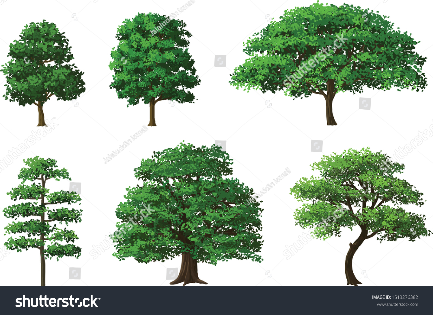 Various Types Trees Created Vectors Very Stock Vector Royalty