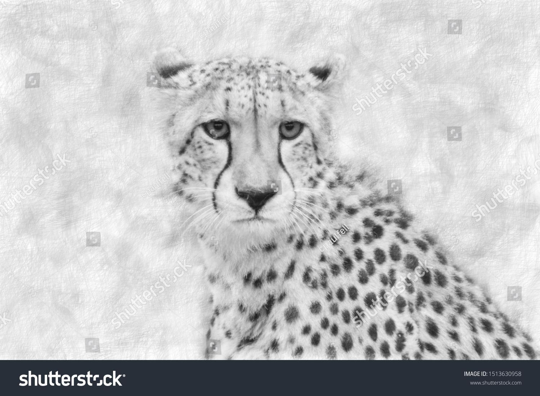 stock-photo-pencil-portrait-of-a-cheetah
