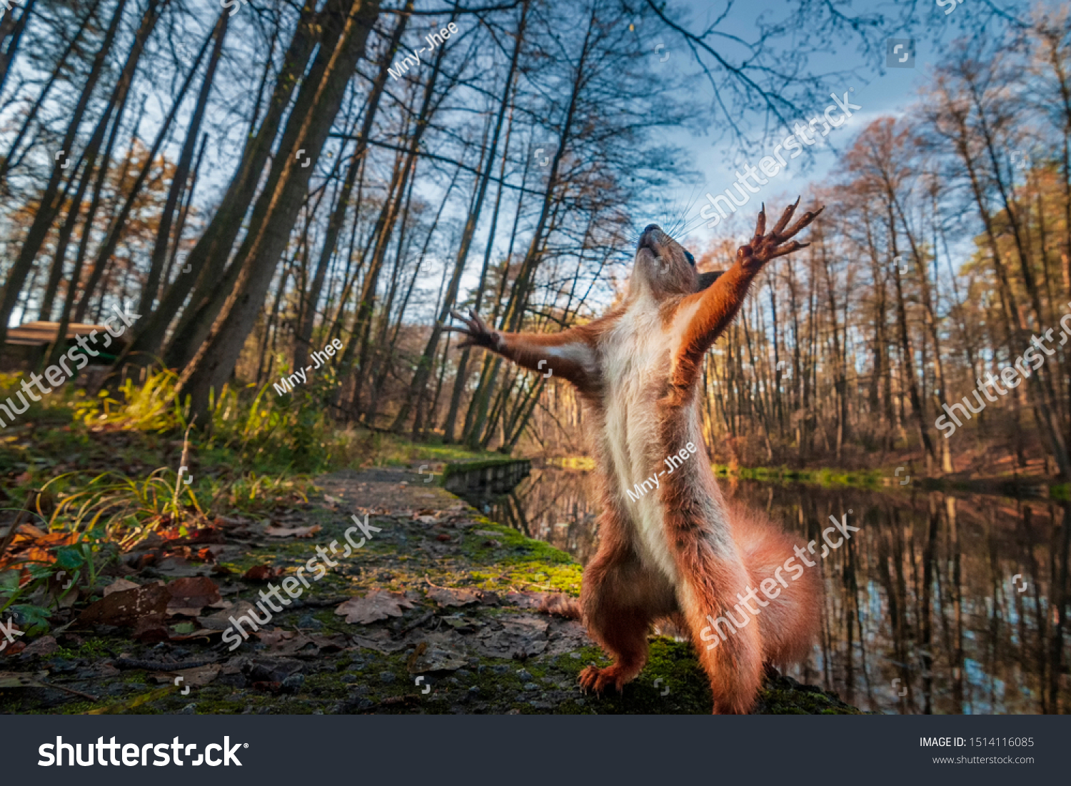 Funny red squirrell standing in the forest like Master of the Universe. Comic animal #1514116085
