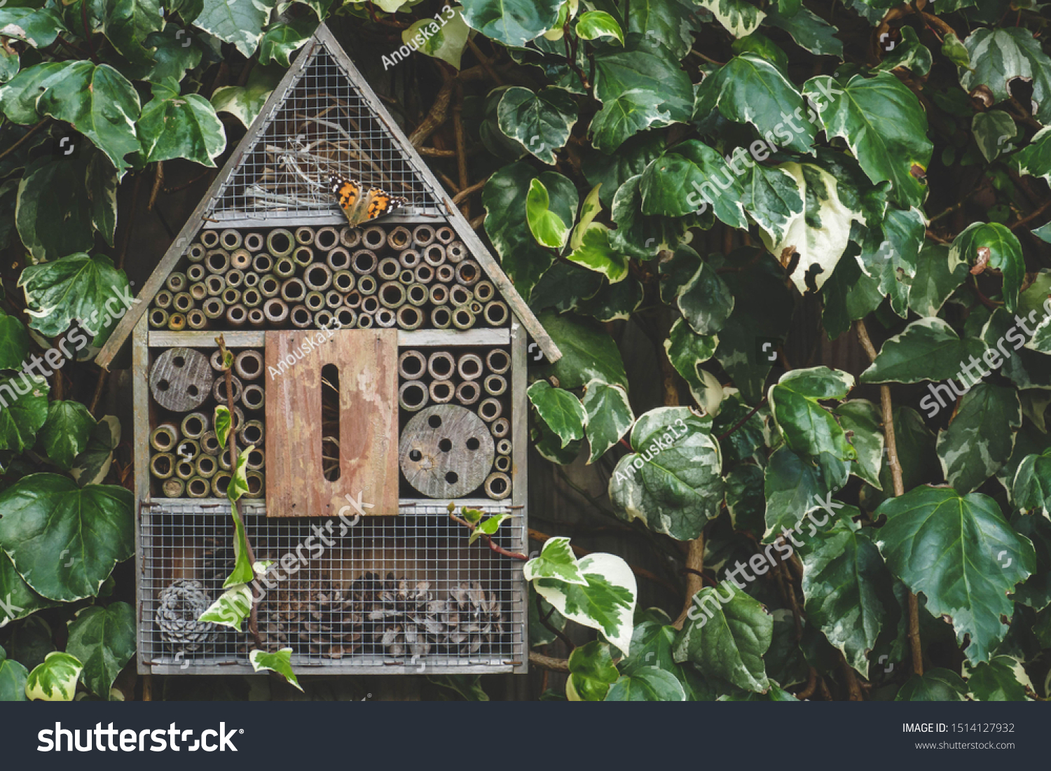 An insect / bug hotel hung on an ivy covered wall in an English country garden. A painted lady butterfly is resting on the wooden front. #1514127932
