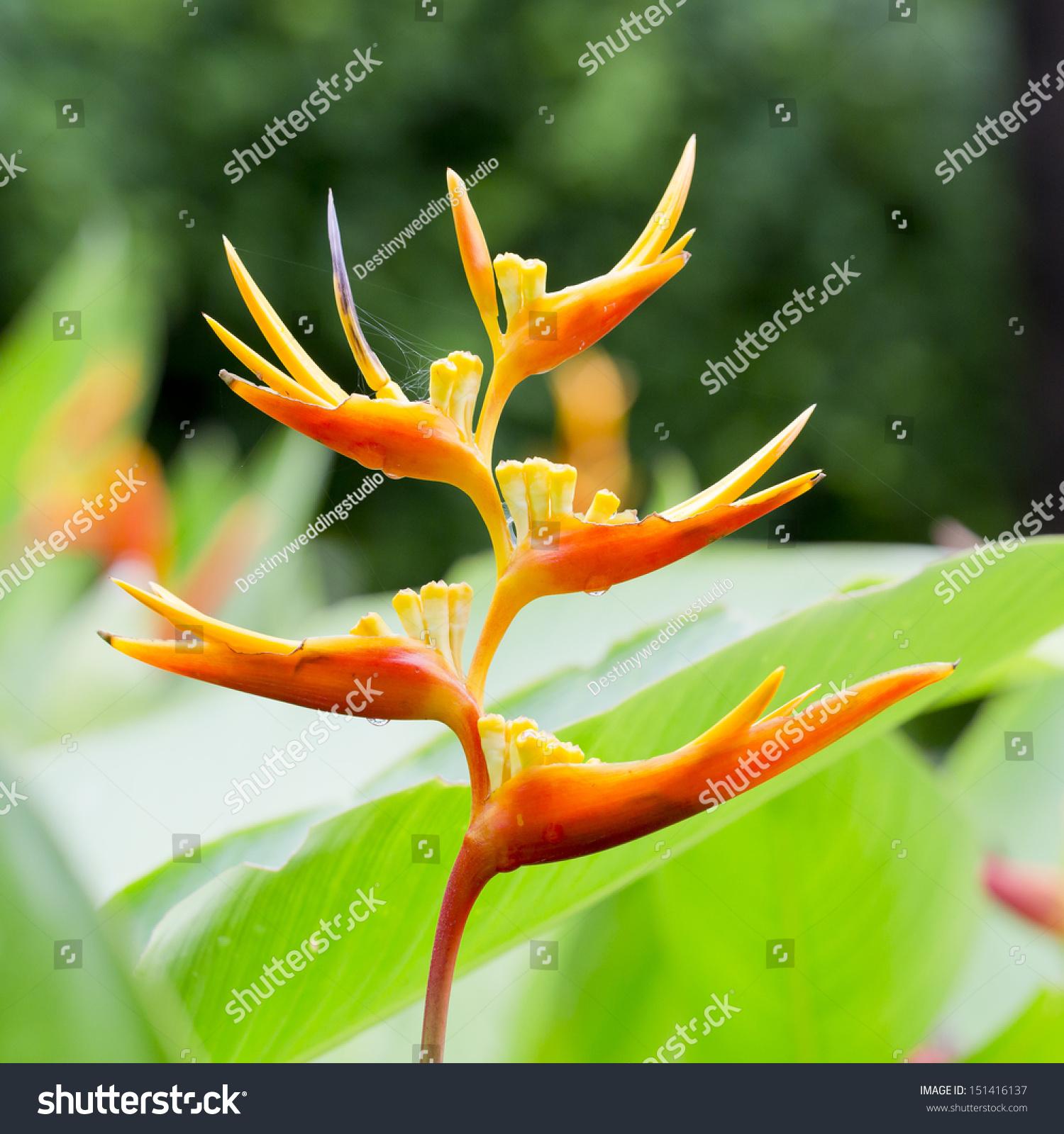 Beautiful Blooming Flowers Orange Color Ez Canvas