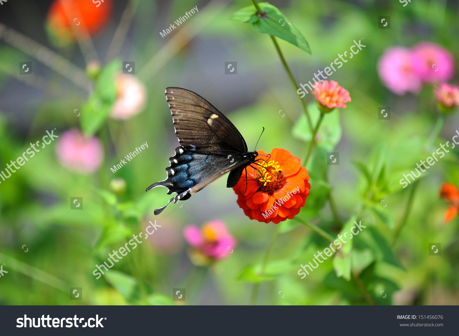 stock-photo-butterfly-on-a-group-of-wild