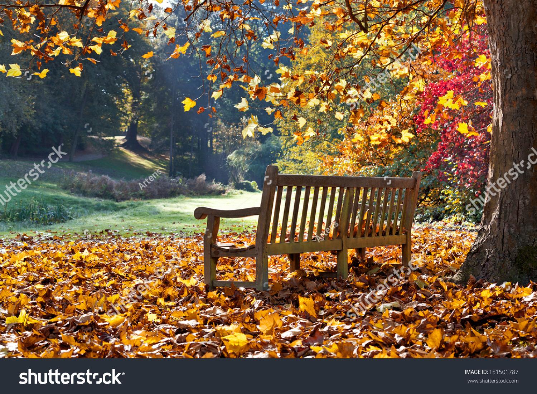 Bench Autumn Park Autumn Landscape Stock Photo 151501787