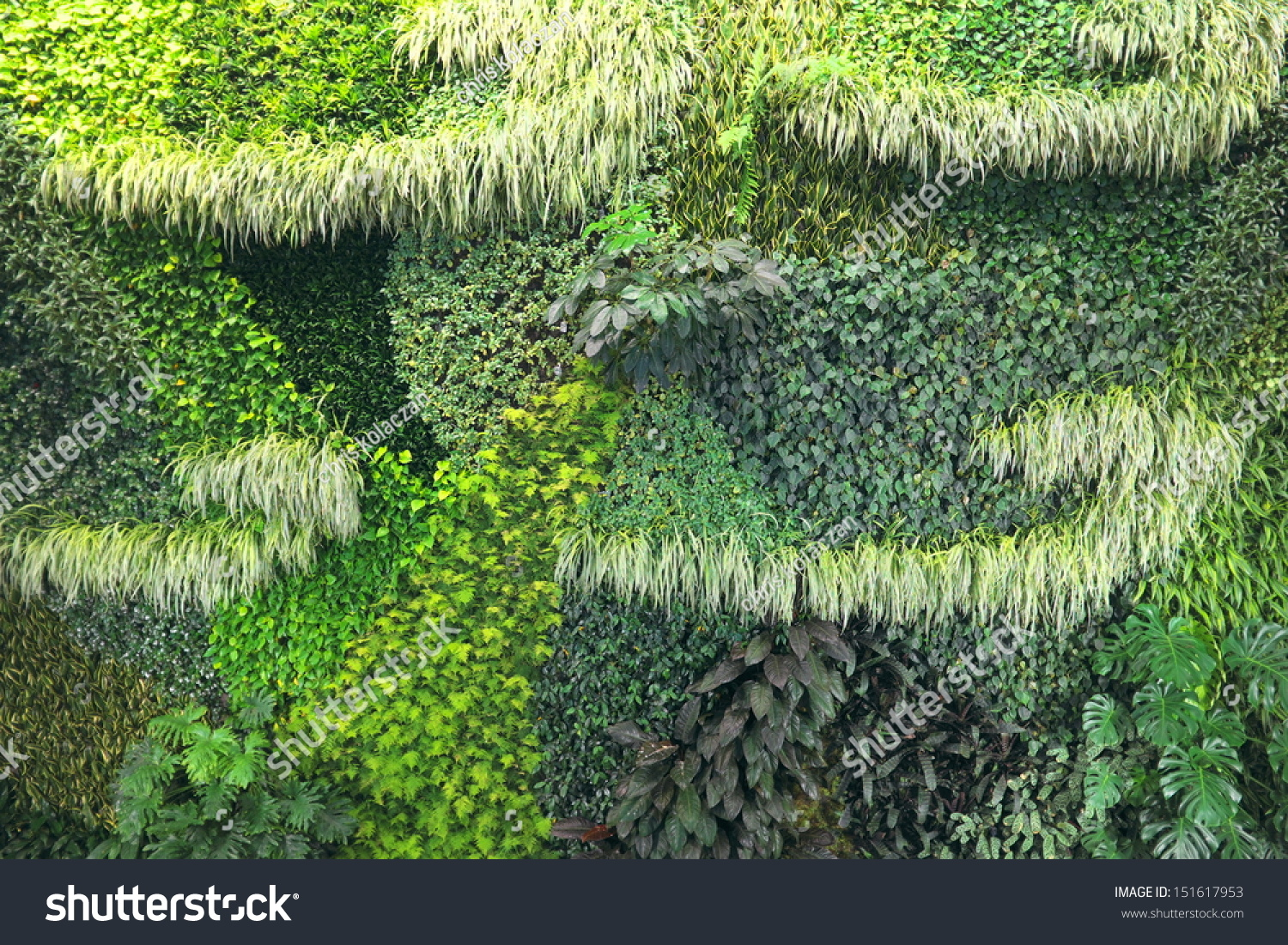 Living Wall Background Showing Lush Growth Stock Photo