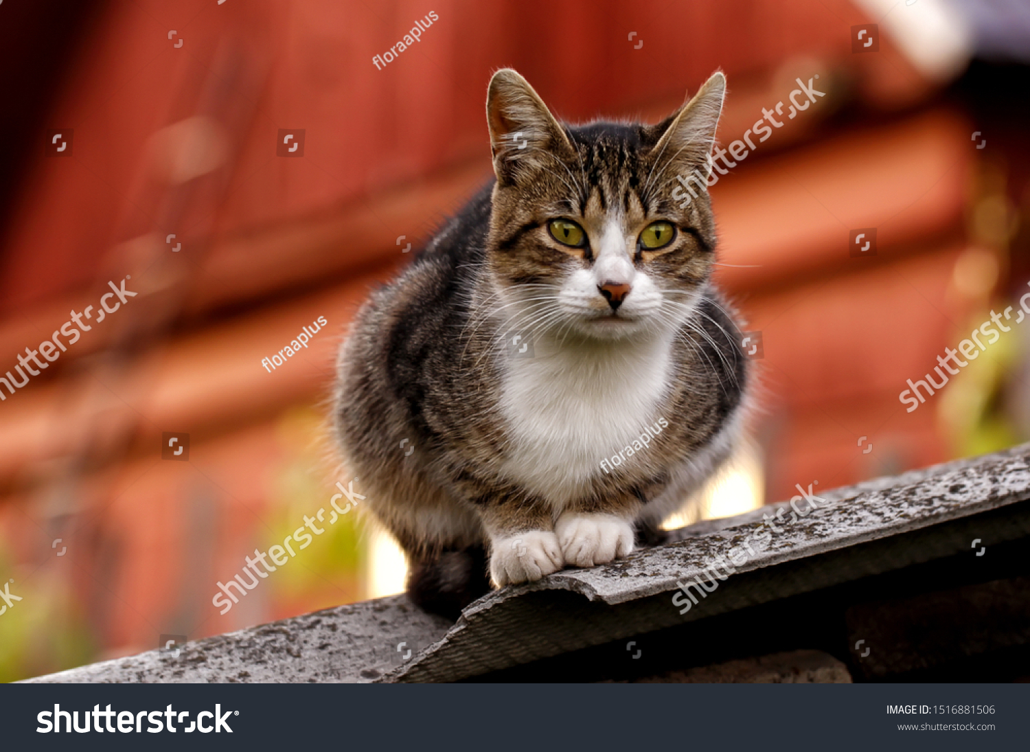 stock-photo-a-grey-striped-cat-with-gree