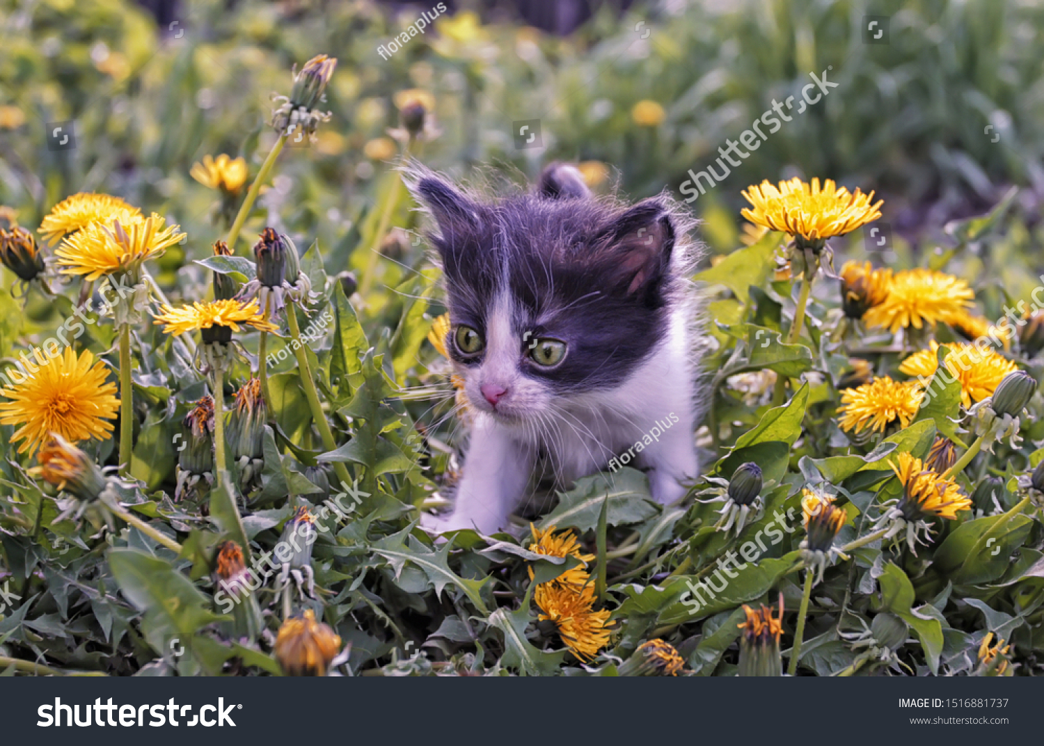 stock-photo-a-cute-little-kitten-in-yell