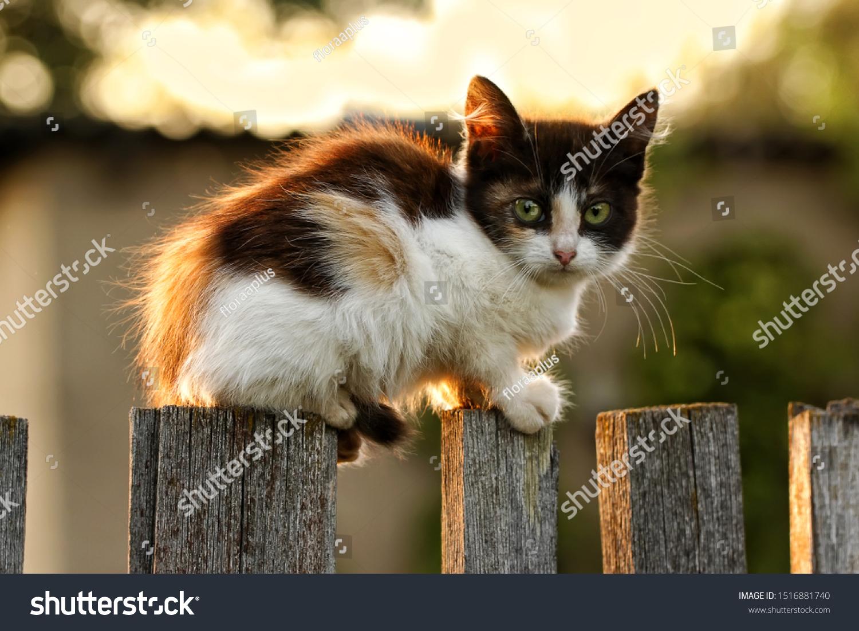 stock-photo-a-cute-little-kitten-sitting