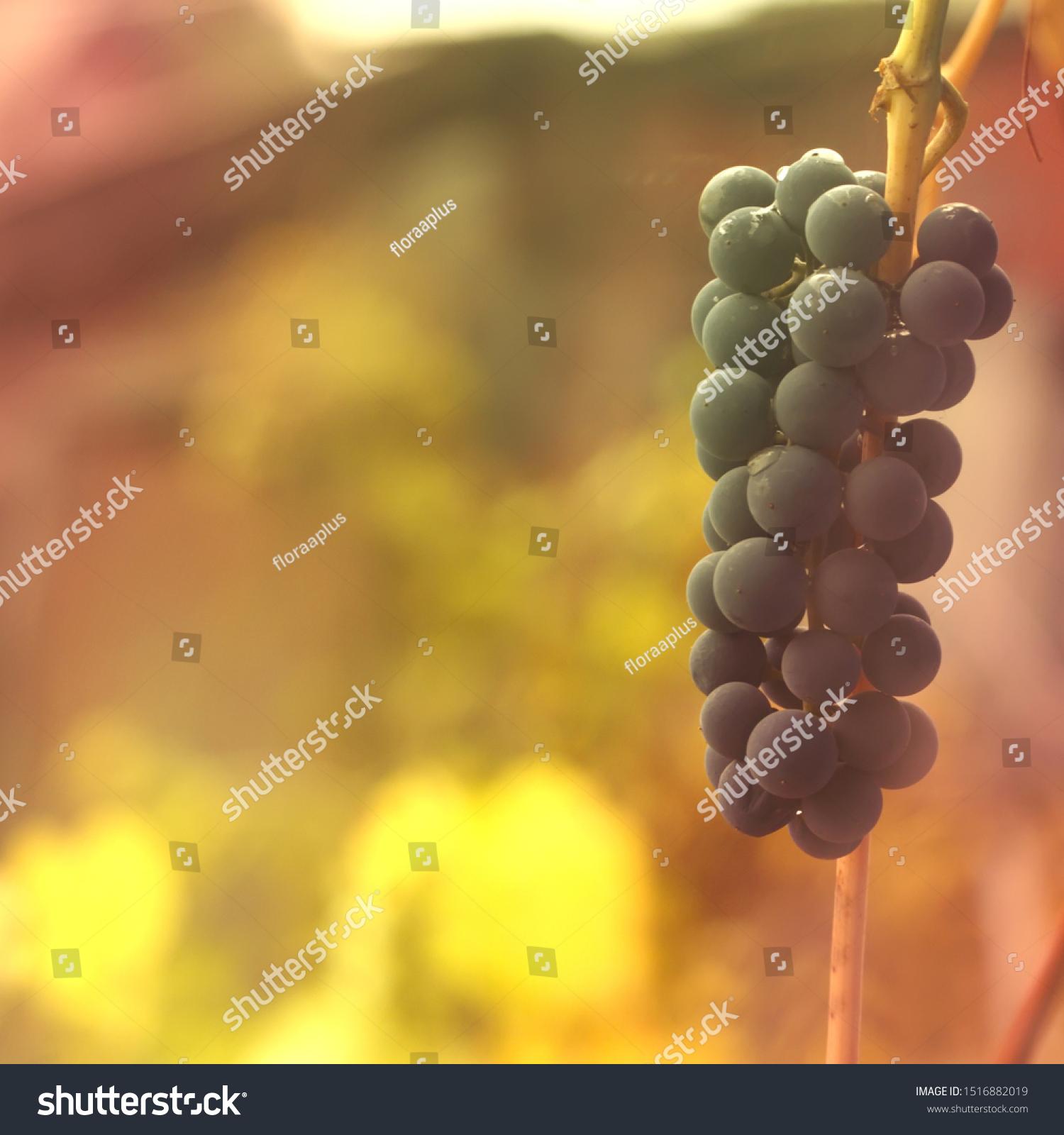 stock-photo-tender-autumn-background-wit