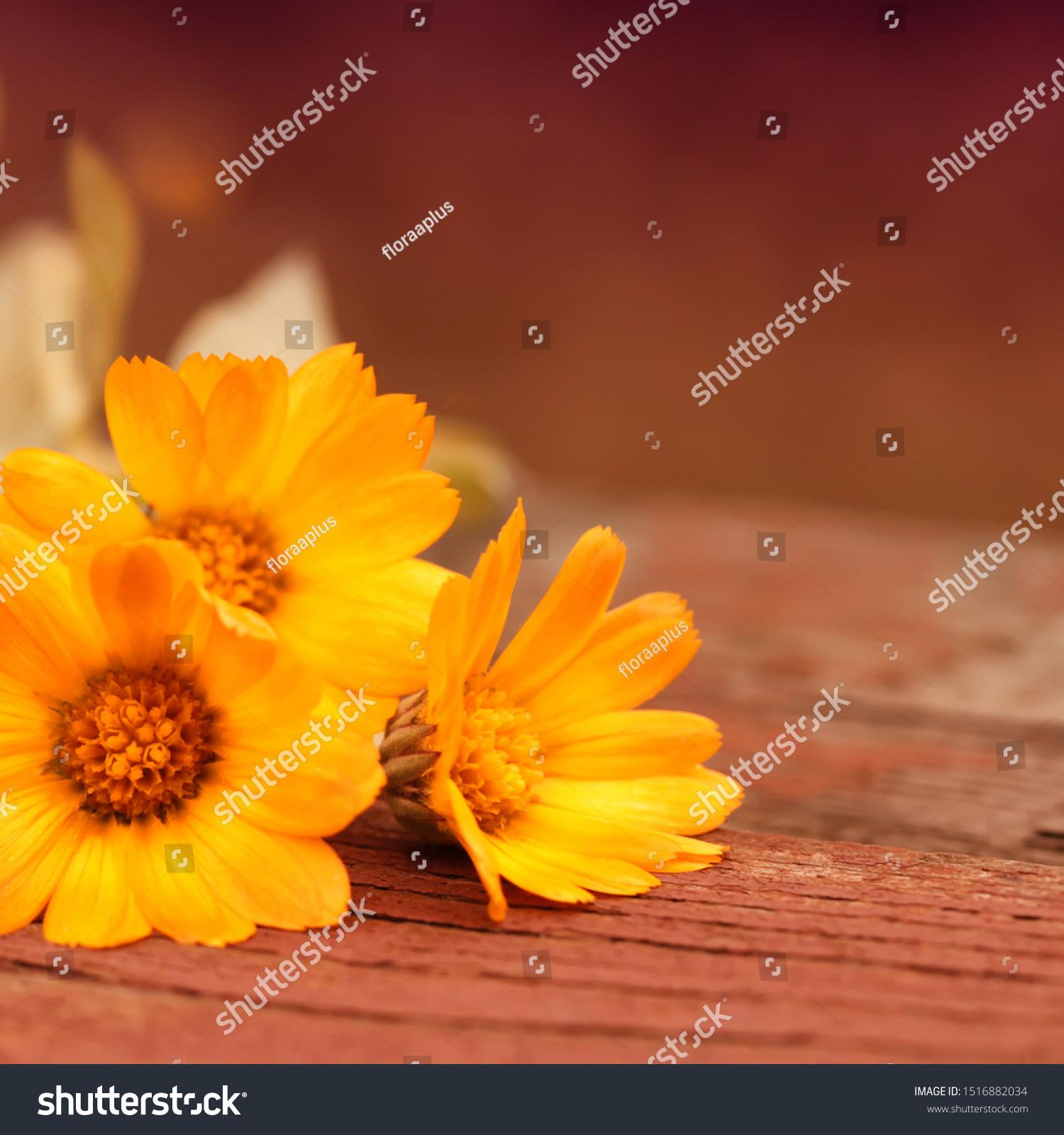 stock-photo-warm-abstract-autumn-backgro